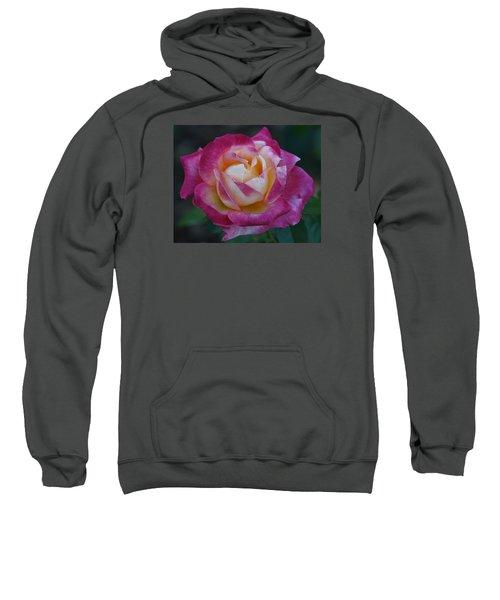 Softness Sweatshirt