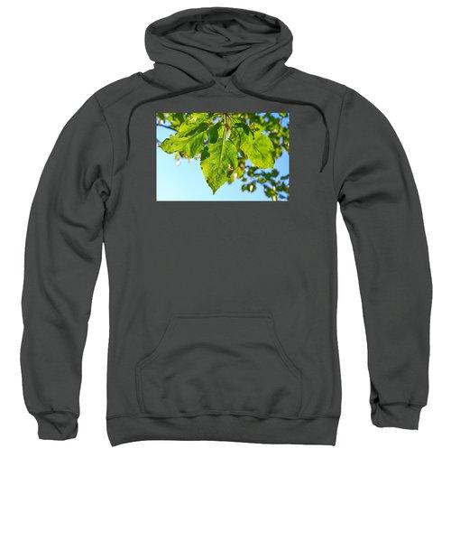 Solar Panels Sweatshirt