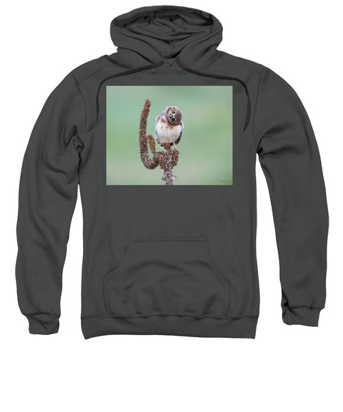 Some Days I Can't Tell Which Way Is Up Sweatshirt