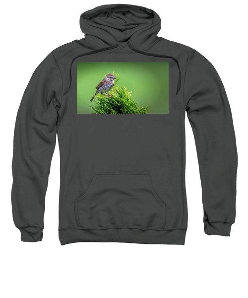 Song Sparrow Perched - Melospiza Melodia Sweatshirt
