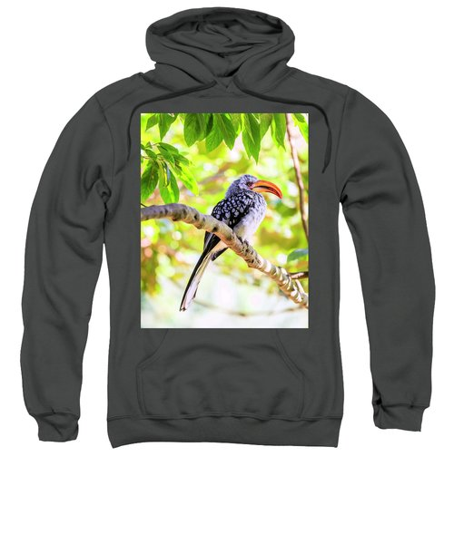 Southern Yellow Billed Hornbill Sweatshirt