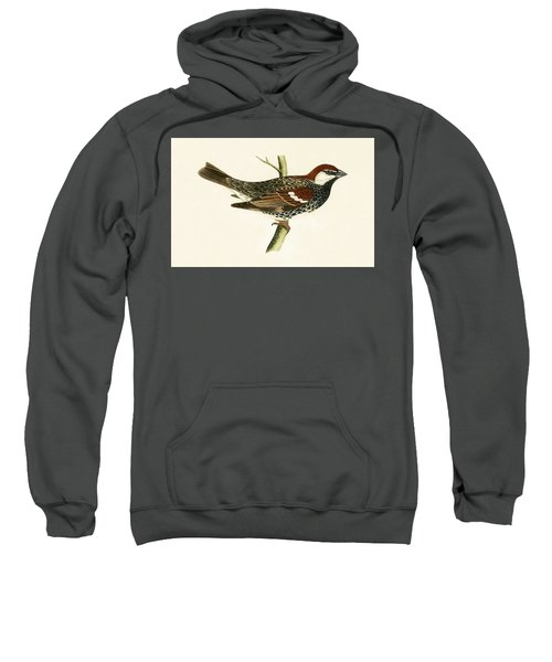 Spanish Sparrow Sweatshirt by English School