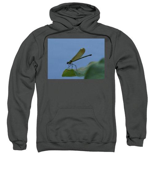 Sparkling Jewelwing #2 Sweatshirt