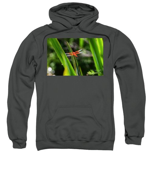 Sparkling Red Dragonfly Sweatshirt