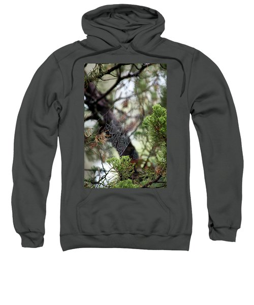 Spider Web In Tree Sweatshirt