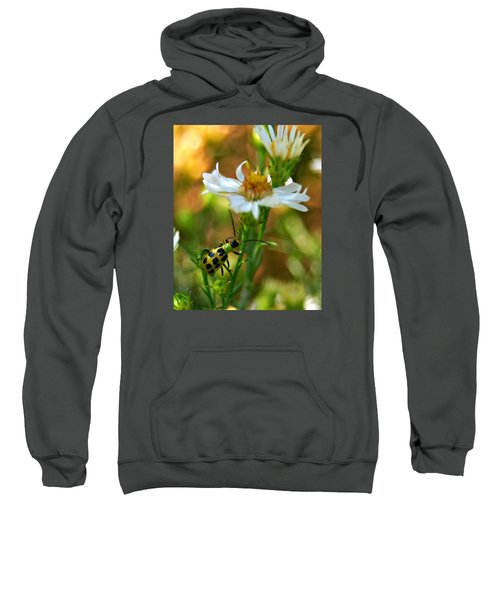 Spotted Cucumber Beetle On Aster Sweatshirt