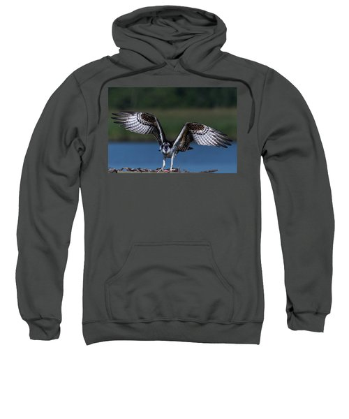 Spread Your Wings Sweatshirt