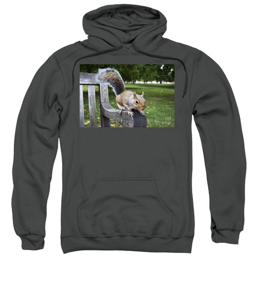 Squirrel Bench Sweatshirt