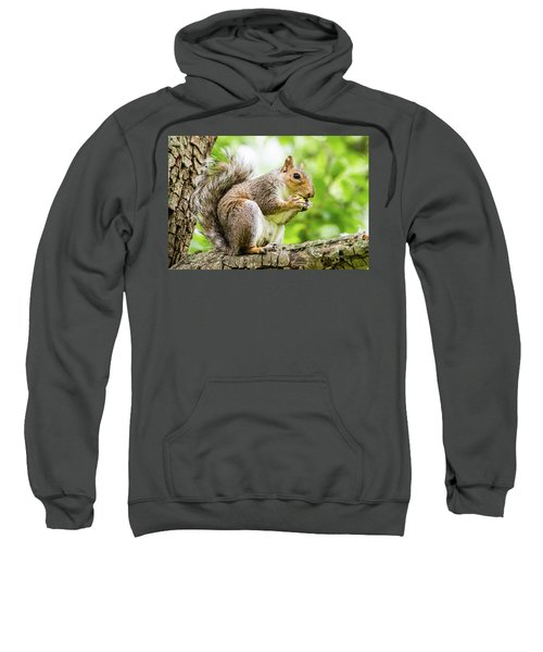 Squirrel Eating On A Branch Sweatshirt