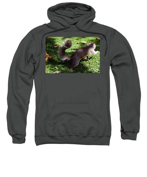 Squirrel Running Sweatshirt