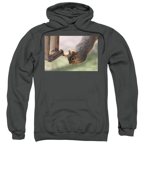 Squirrel Stealing Food Sweatshirt