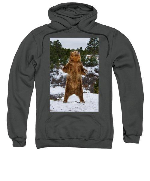 Standing Grizzly Bear Sweatshirt