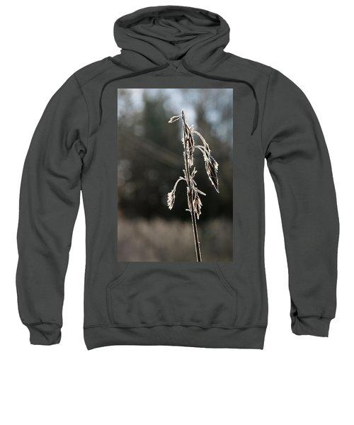 Straw In Backlight Sweatshirt