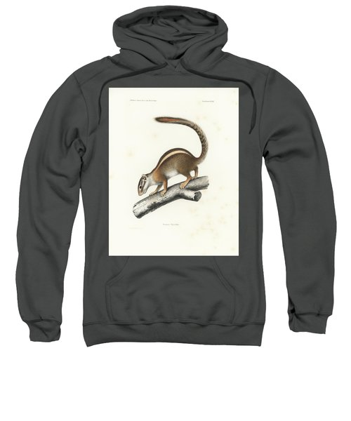 Sweatshirt featuring the drawing Striped Bush Squirrel, Paraxerus Flavovittis by J D L Franz Wagner