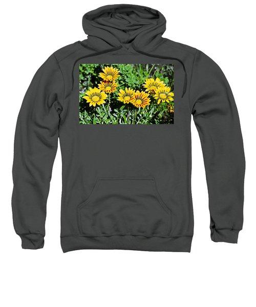 Striped Daisies--film Image Sweatshirt