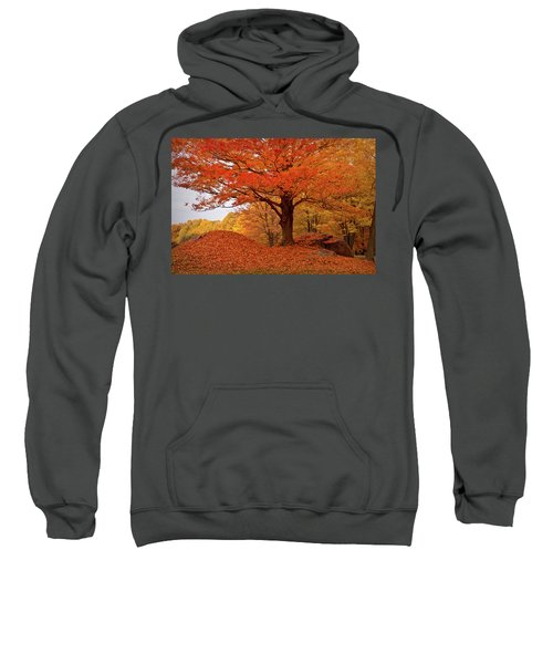 Sturdy Maple In Autumn Orange Sweatshirt