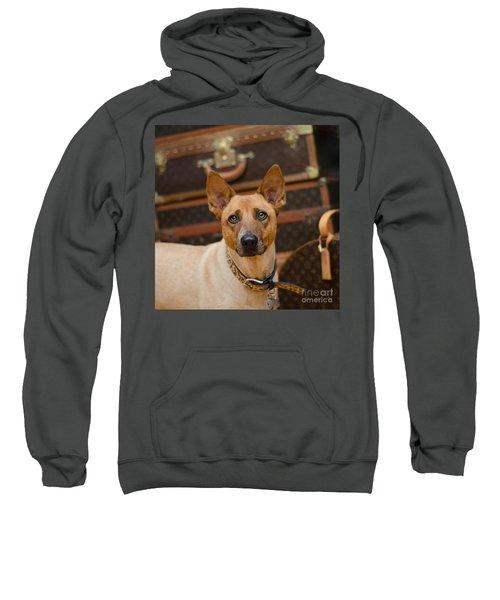 Sugar Sweatshirt