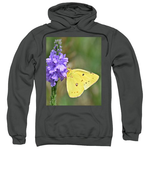 Sulfur Butterfly Sweatshirt