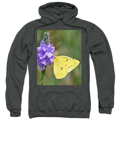 Sulfur Butterfly Sweatshirt