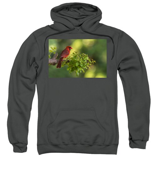 Summer Cardinal New Jersey Sweatshirt
