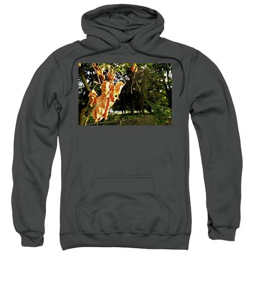 Summer's Toll Sweatshirt