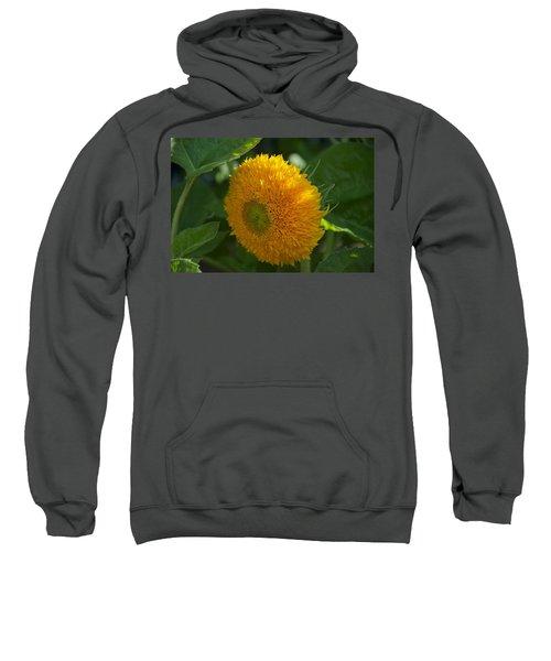 Sun Sweatshirt