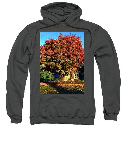 Sun-shining Autumn Sweatshirt