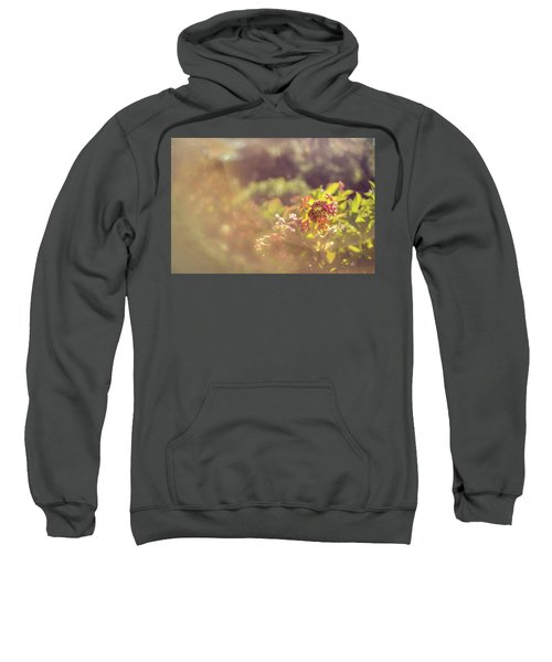 Sunbathe Morning Sweatshirt