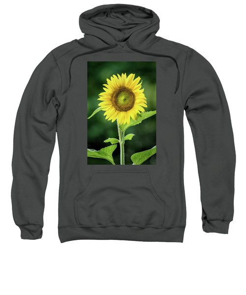 Sunflower In Bloom Sweatshirt