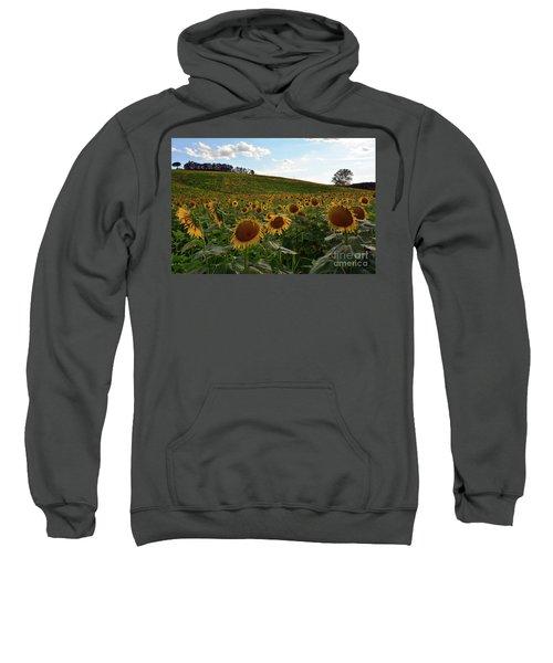 Sunflowers Fields  Sweatshirt