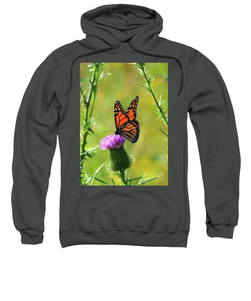 Sunlit Monarch  Sweatshirt