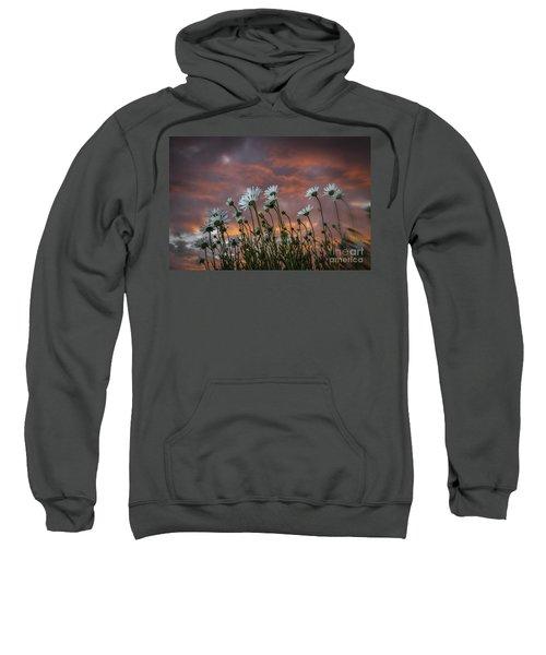 Sunset And Daisies Sweatshirt