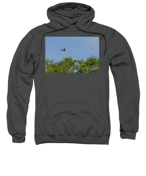 Swallow-tailed Kite Flyover Sweatshirt