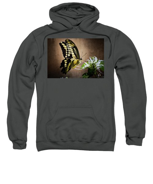 Swallowtail Sweatshirt