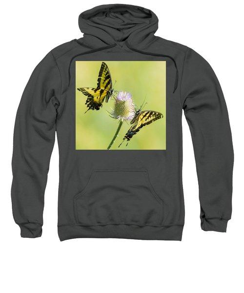 Swallowtails On Thistle  Sweatshirt