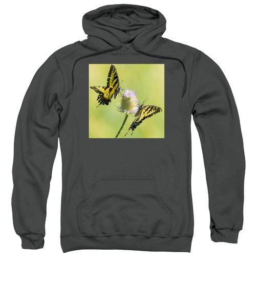Swallowtails On Thistle  Sweatshirt