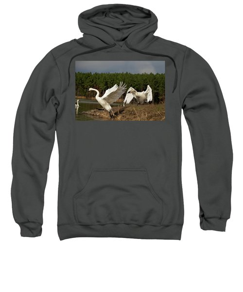 Swan Fight Sweatshirt