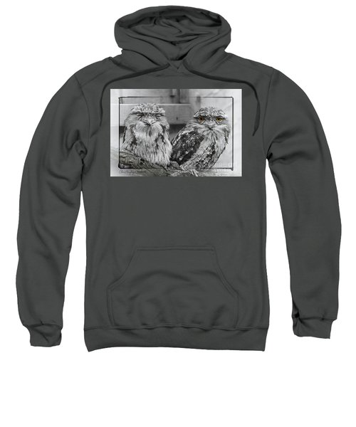 Tawney Frogmouths Sweatshirt