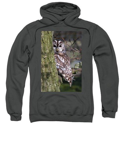Tawny Owl In A Woodland Sweatshirt