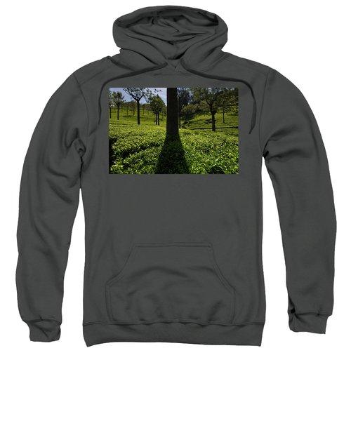 Tea Sweatshirt