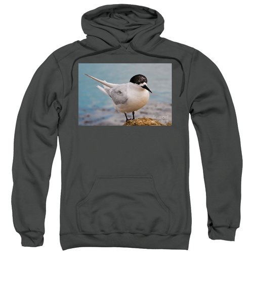 Sweatshirt featuring the photograph Tern 1 by Werner Padarin