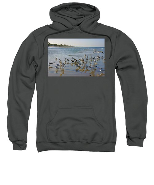 Terns And Seagulls On The Beach In Naples, Fl Sweatshirt