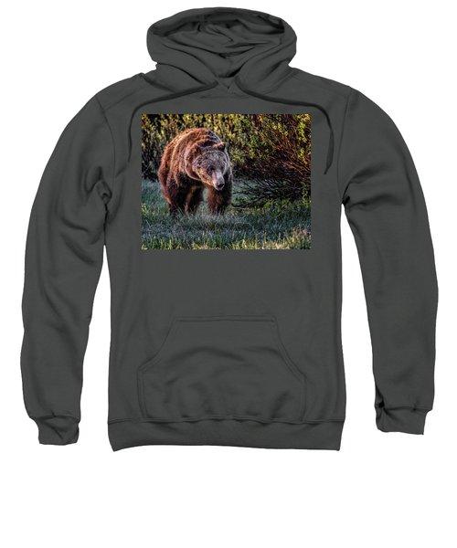 Teton Grizzly Sweatshirt