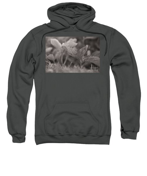 The Allotment Project - Strawberry Plant Sweatshirt