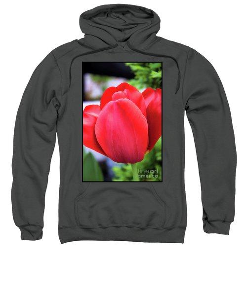 The Tulip Beauty Sweatshirt