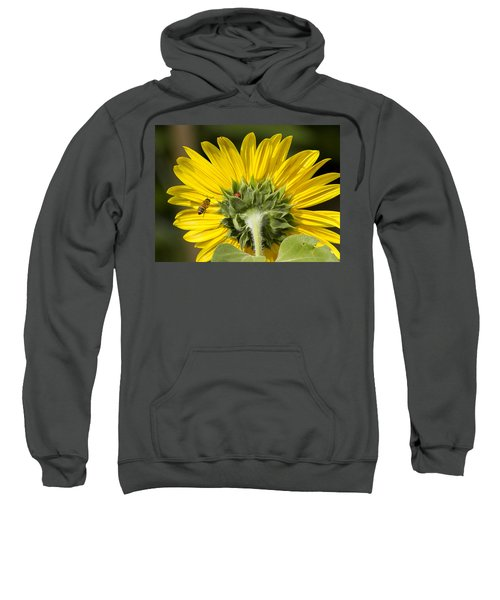 The Bee Lady Bug And Sunflower Sweatshirt