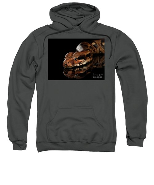 The Boa Constrictors, Isolated On Black Background Sweatshirt