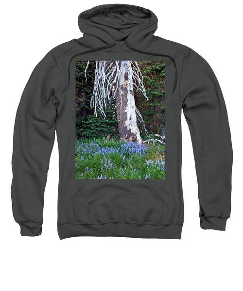 The Ghost Tree Sweatshirt