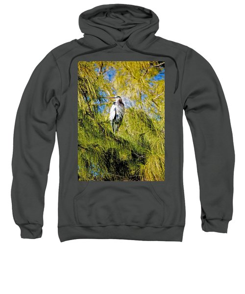 The Heron's Whiskers Sweatshirt