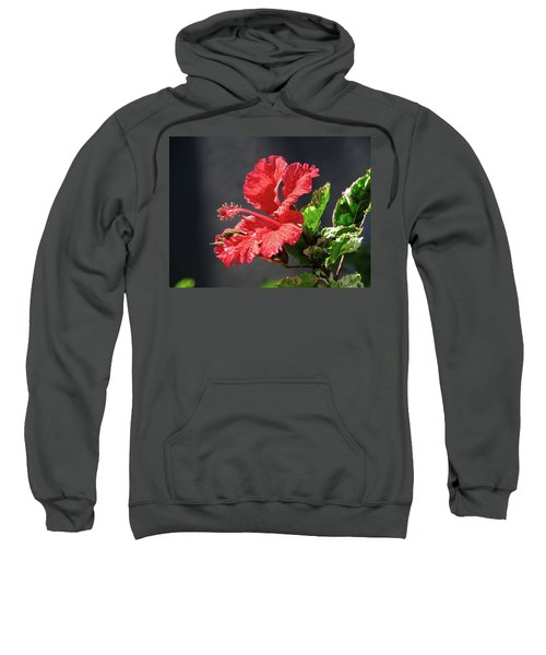 The Mallow Hibiscus Sweatshirt
